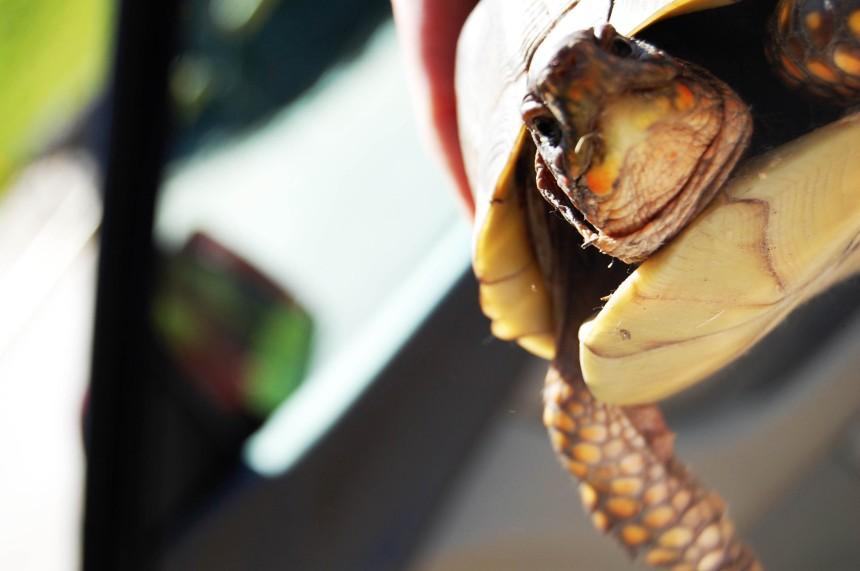 madame turtle