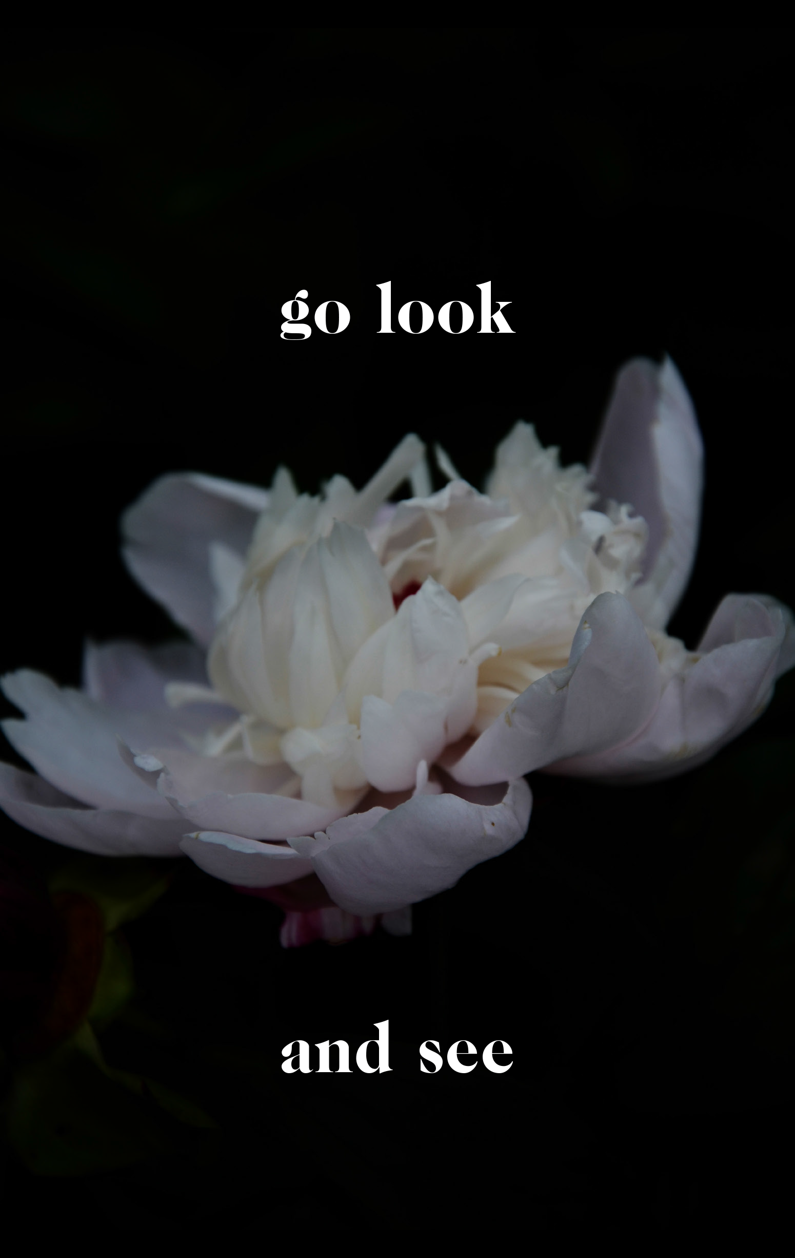 go-look-and-see-19_cover