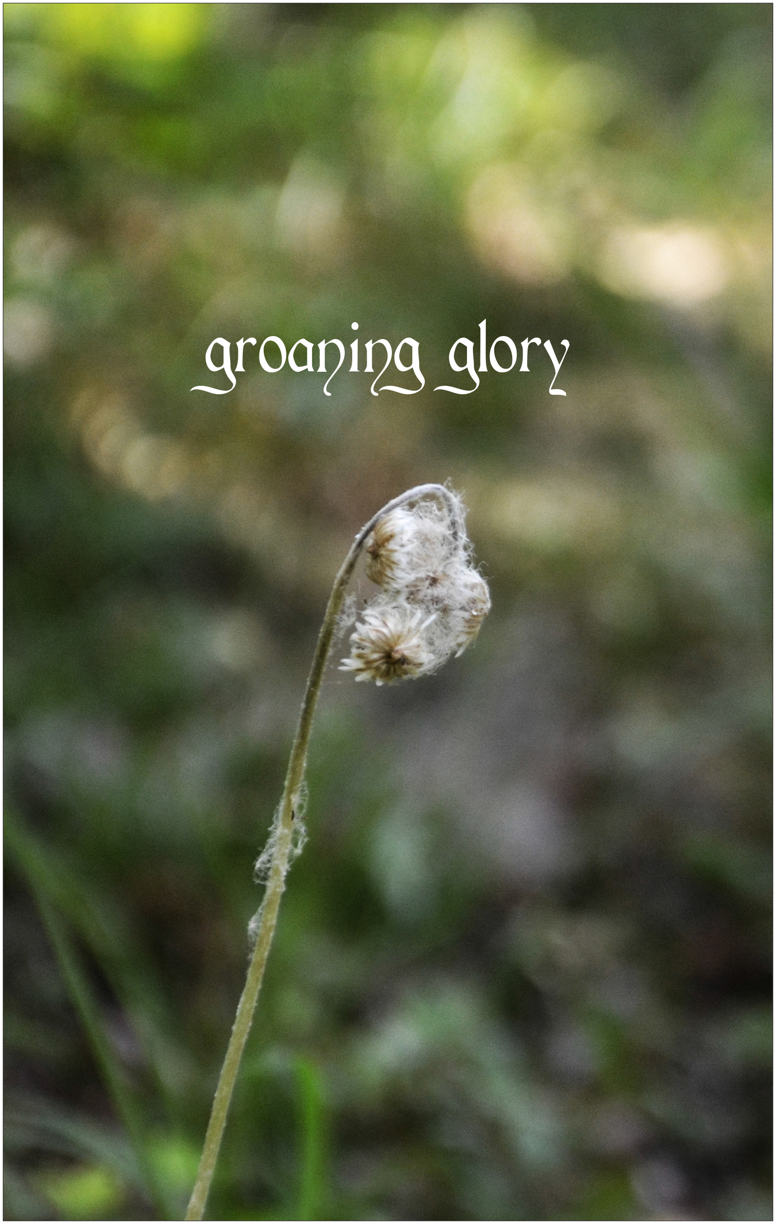 groaning-glory-15_cover
